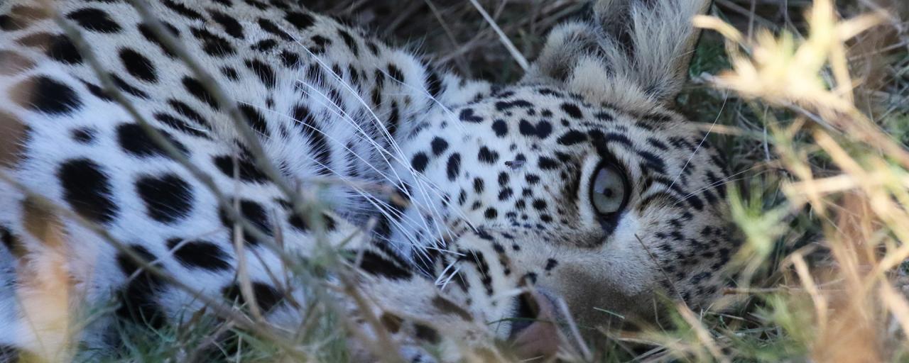 exploingafrica safariadv botswana moremi romina facchi safari travel