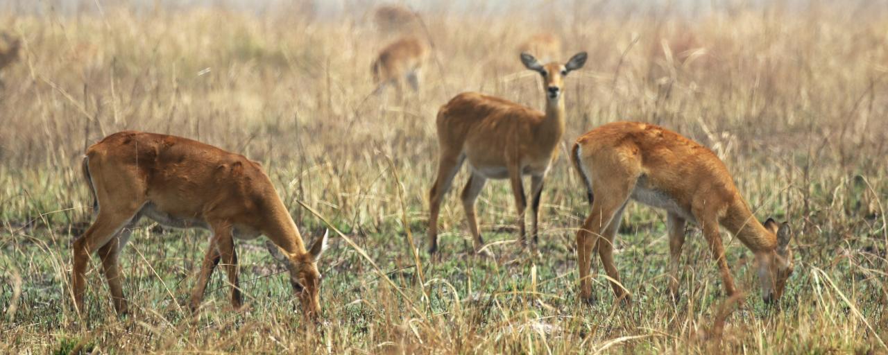 togo exploringafrica safariadv romina facchi travel kob
