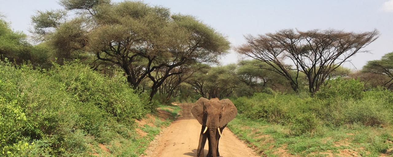 tanzania manyara exploringafrica safariadv romina facchi travel safari