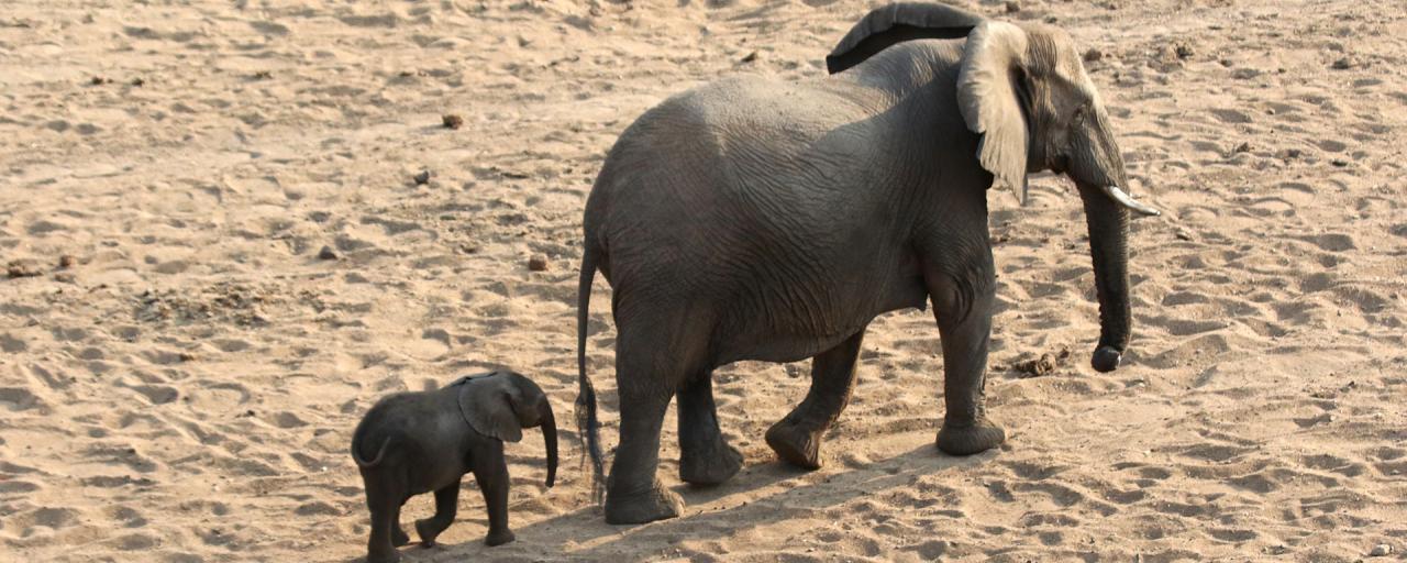 south africa sudafrica exploringafrica safariadv kruger elephant safari travel