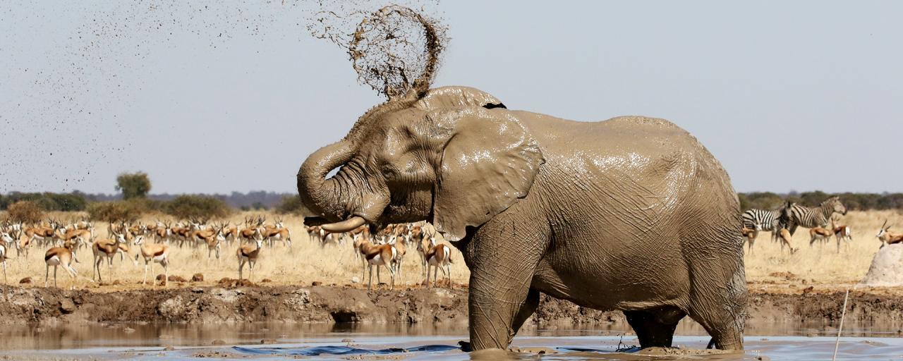botswana nxai elephant romina facchi exploringafrica safariadv