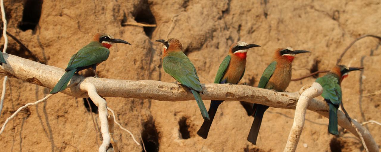 tanzania ngorongoro serengeti tarangire manyara exploringafrica safariadv romina facchi travel safari