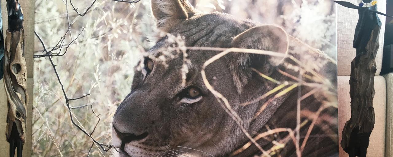 fotoquadro print photo stampa fotografie exploring africa