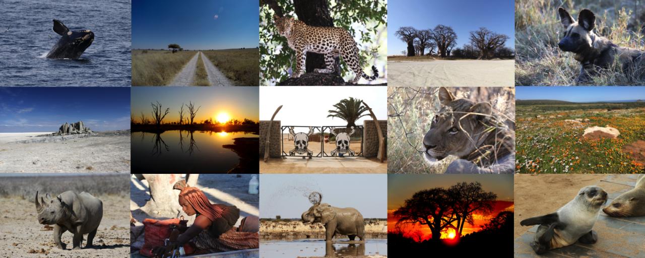 exploringafrica safariafv safari romina facchi namibia botswana south africa
