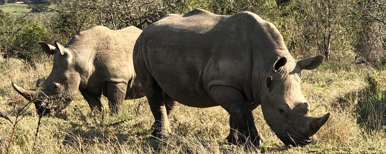 south africa sudafrica exploringafrica safariadv Hluhluwe-iMfolozi safari travel