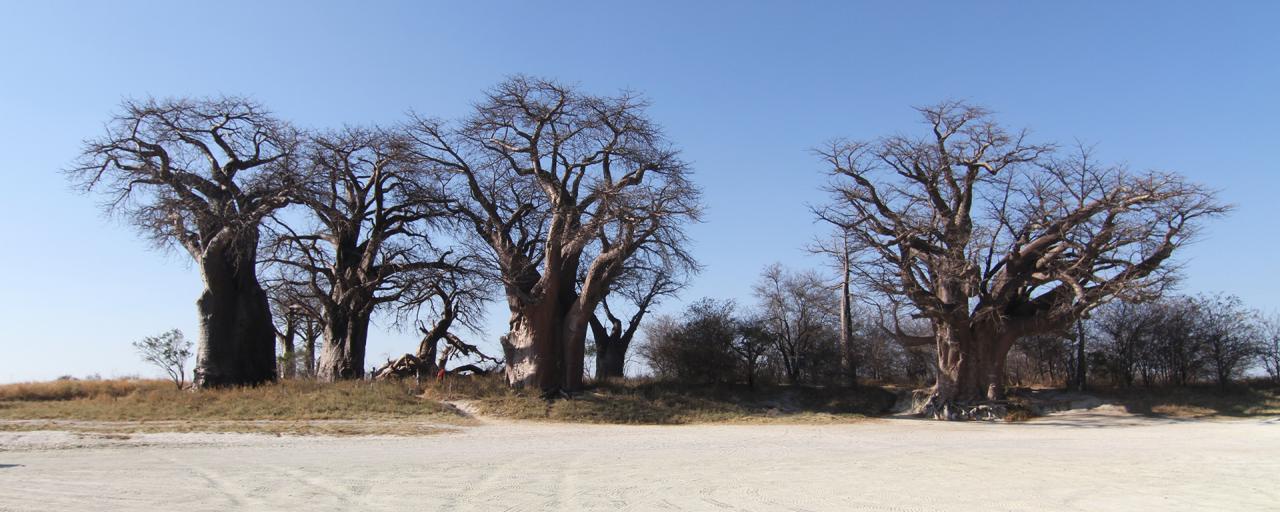 nxai pan botswana exploringafrica safariadv romina facchi travel safari baobab