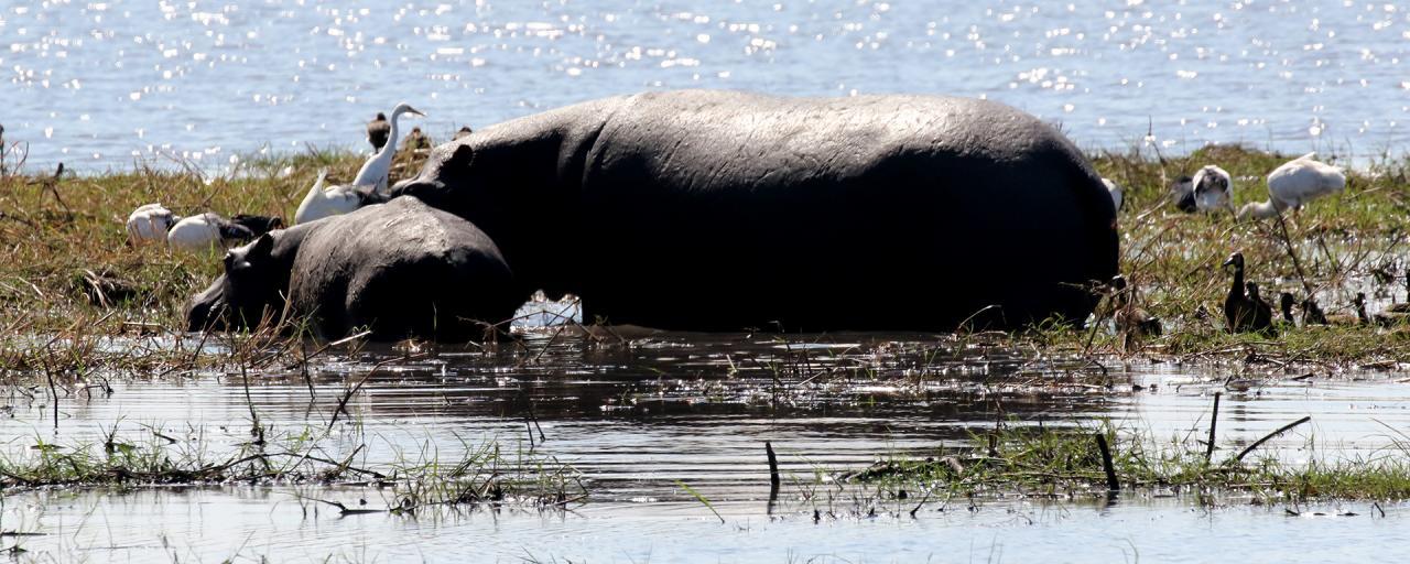 namibia exploringafrica safariafv safari romina facchi mahango travel