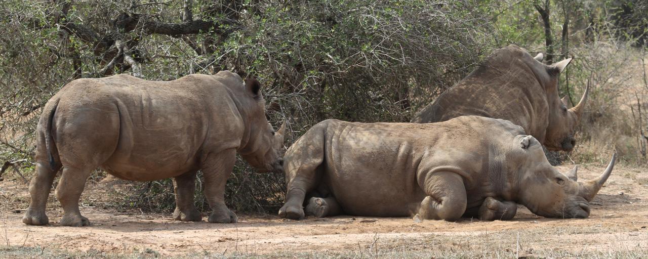 swaziland exploringafrica safariadv romina facchi travel safari africa