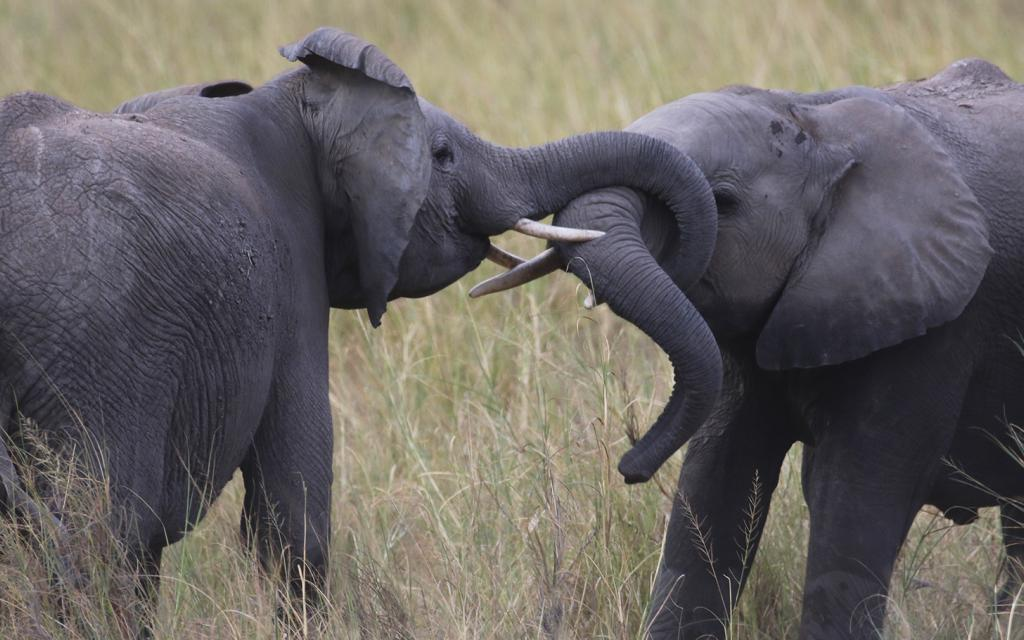 "Amboseli National Park well knows as the ""elephants park"" here there are the most beautiful elephants in all Africa"