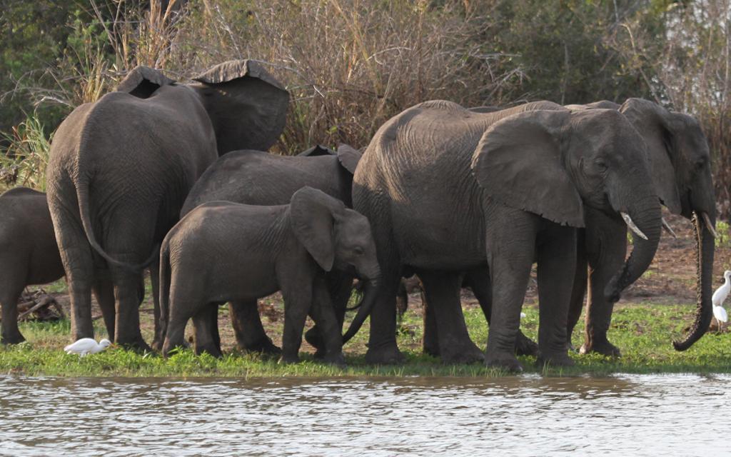 tanzania tarangire elephant exploringafrica safariadv romina facchi