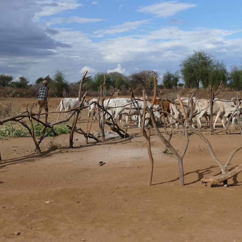 etiopia ethiopia exploringafrica safariadv travel omo valley dorze hamar kara dassanech konso ssanech konso
