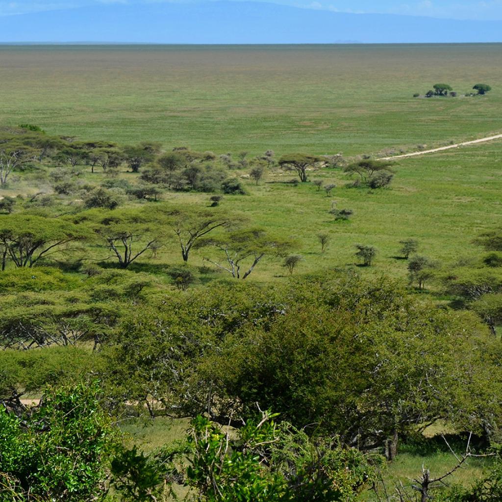 Naabi Hills in Serengeti National Park during the green season