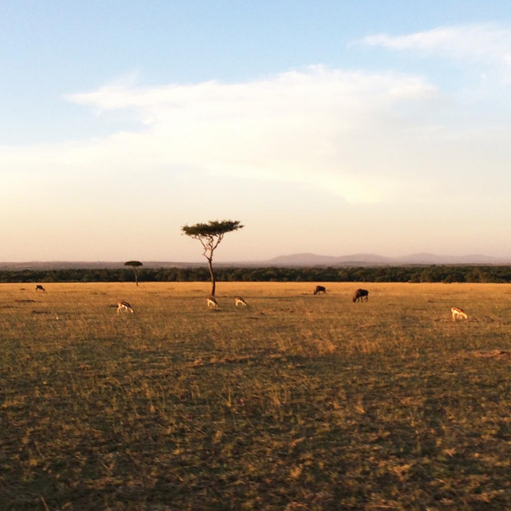 masai mara exploringafrica savannah romina facchi safariadv great migration