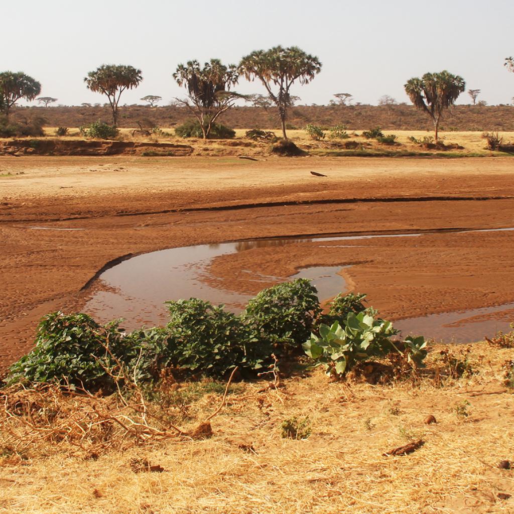 Samburu National Reserve river ewes ngiro Kenya Romina Facchi