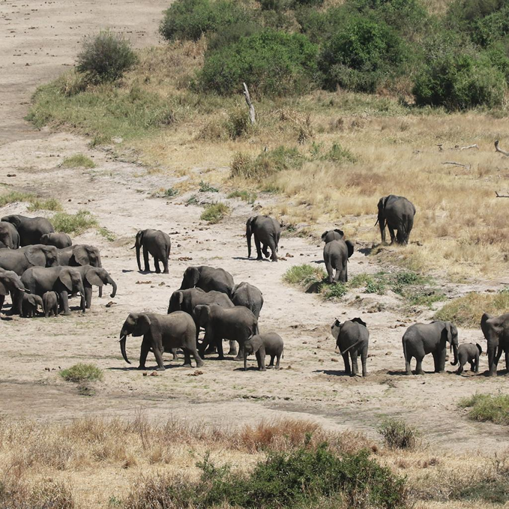 the Tarangire National Park is the park of elephants