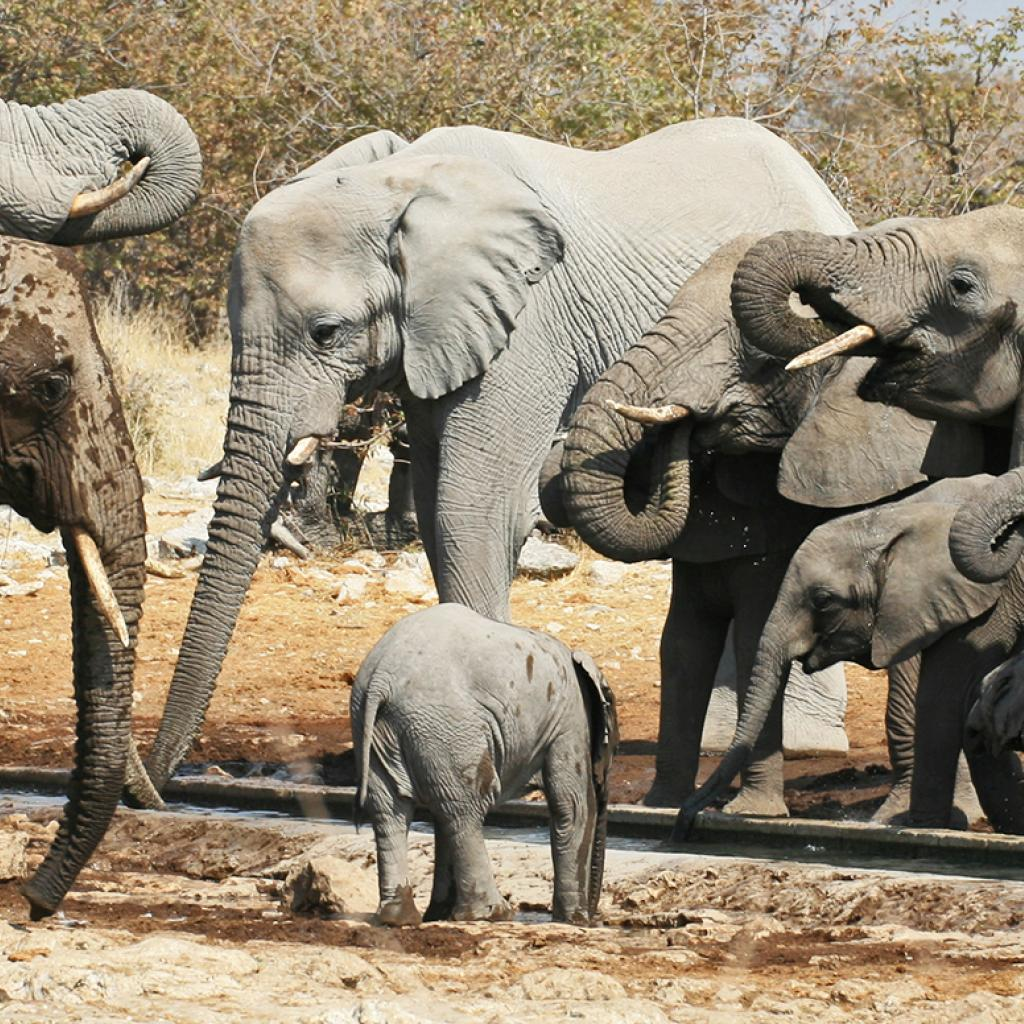 Etosha National Park pan and elephants