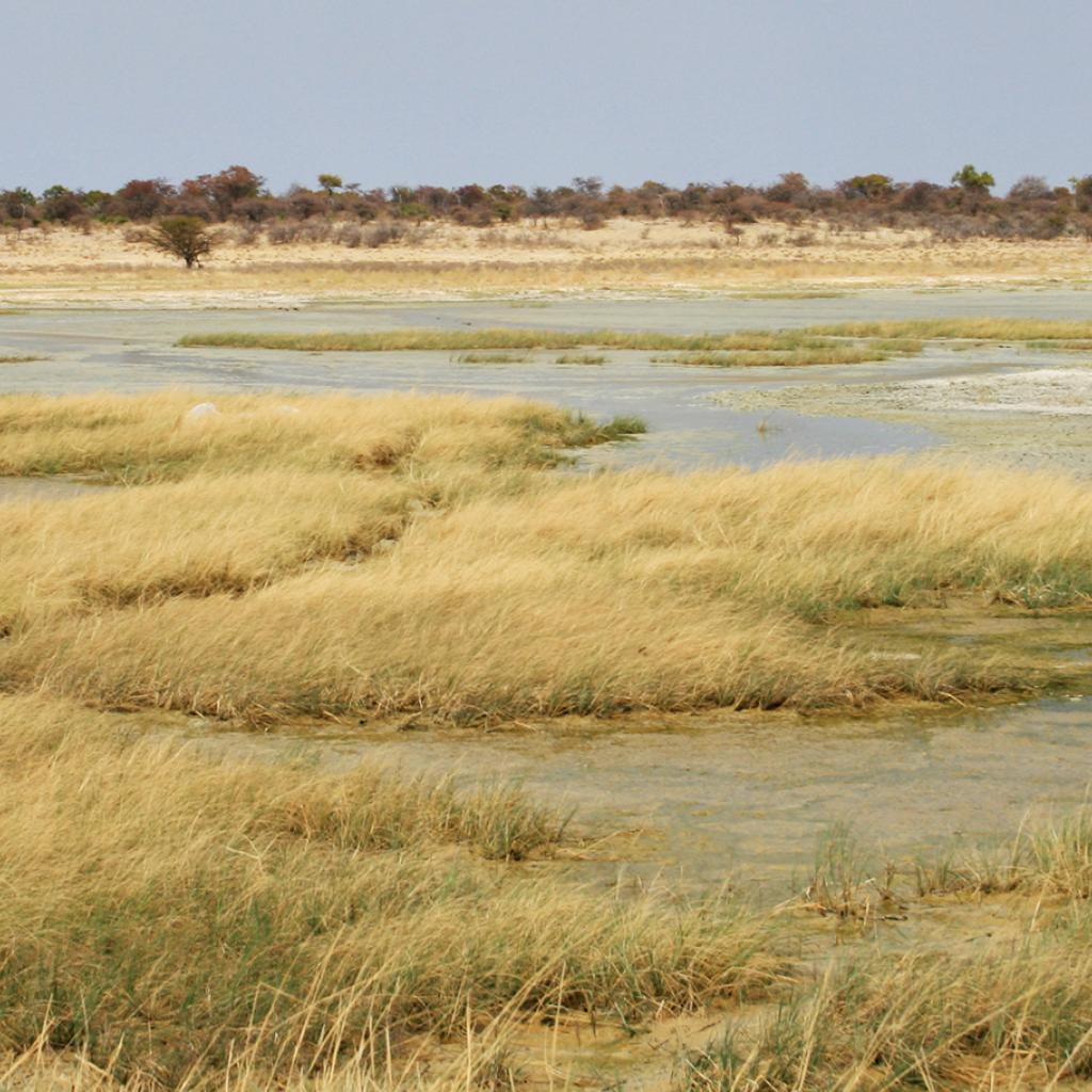 Etosha National Park the pan