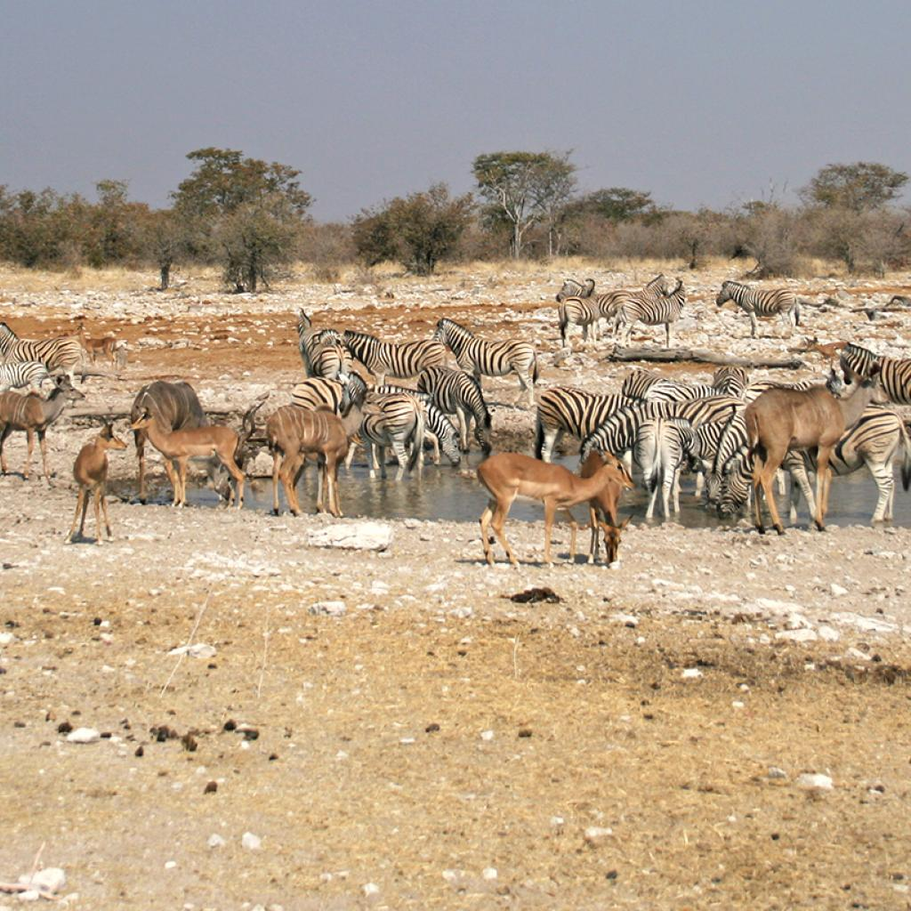 many animals around the water hole in Etosha National Park