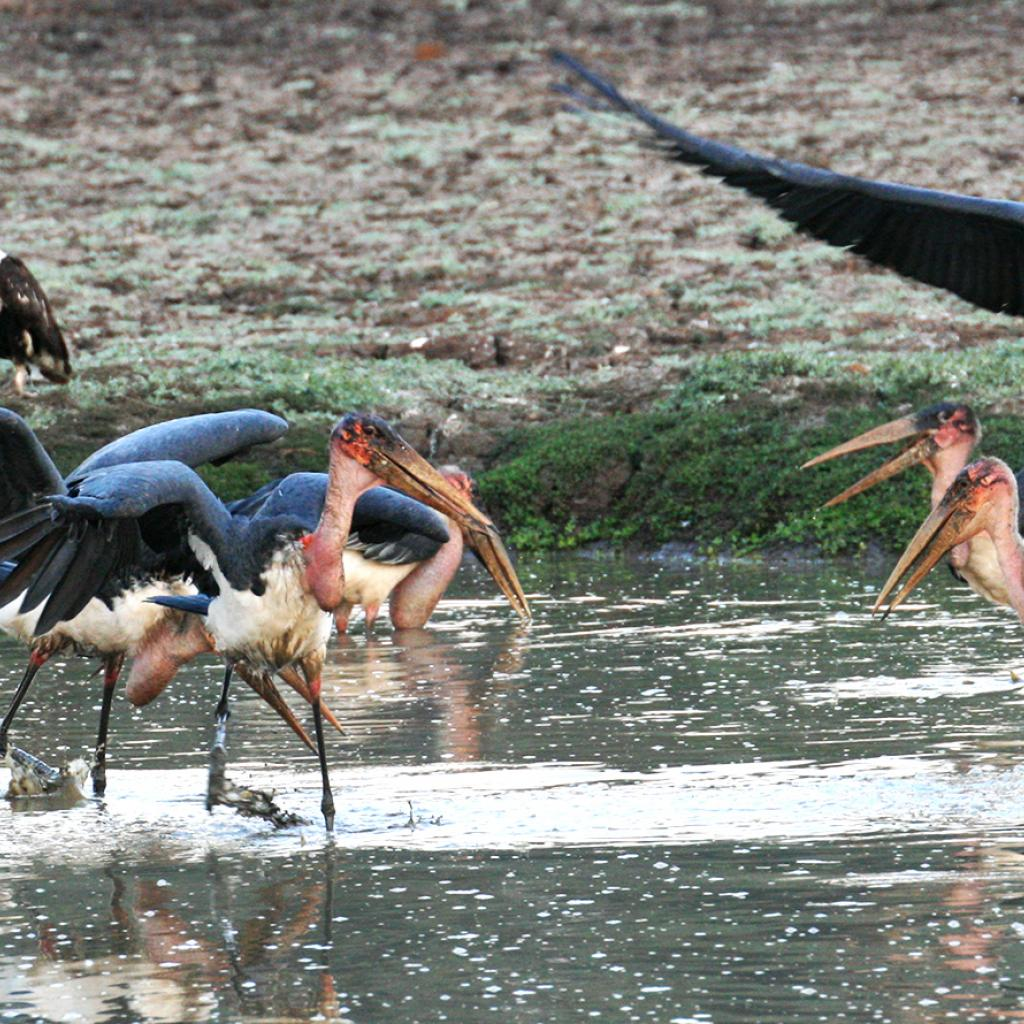 zimbabwe marabou safariadv exploringafrica romina facchi travel viaggi africa safari