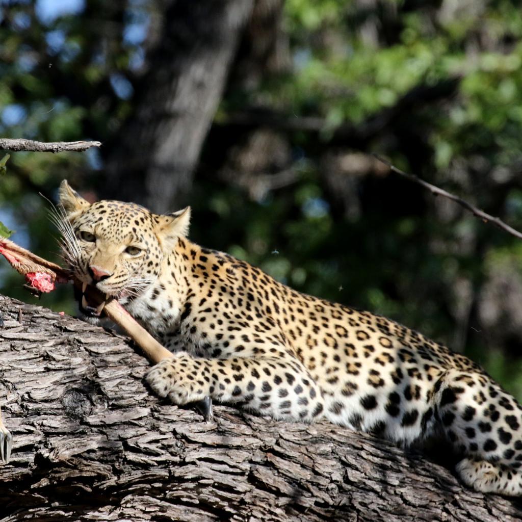 exploringafrica safariadv moremi botswana rominafacchi