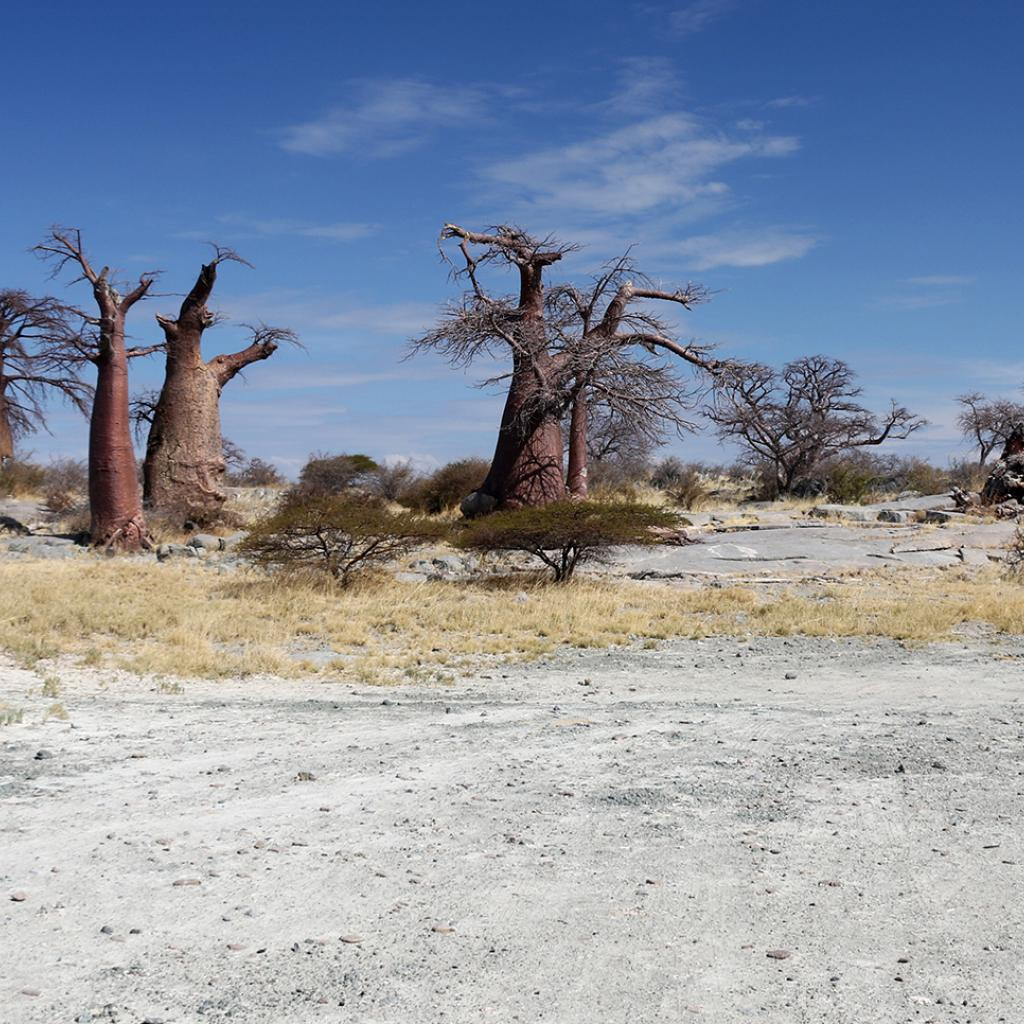 botswana safari sua pan kubu island africa safariadv exploringafrica romina facchi