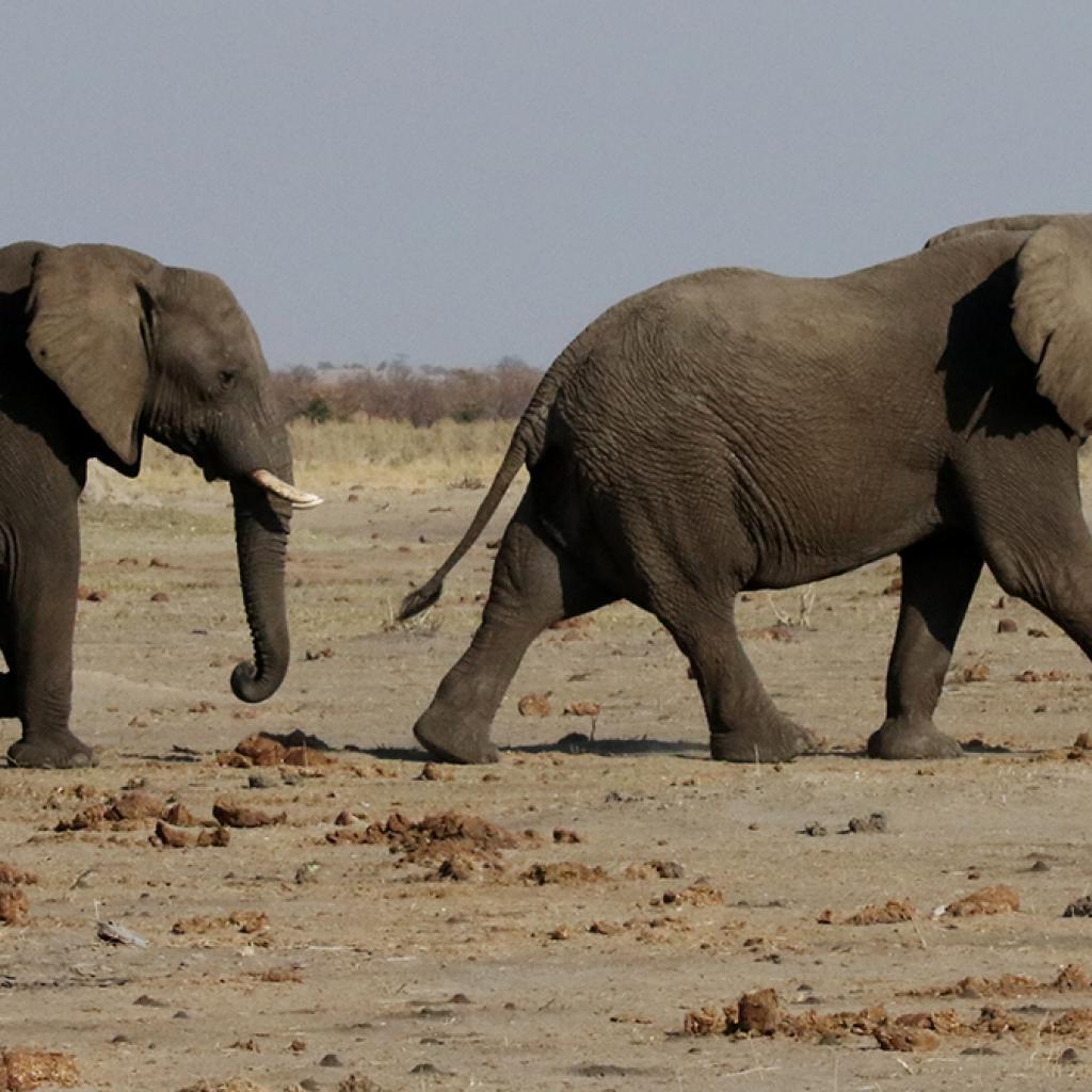 botswana south africa exploringafrica safariadv romina facchi travel chobe savuti moremi okavango