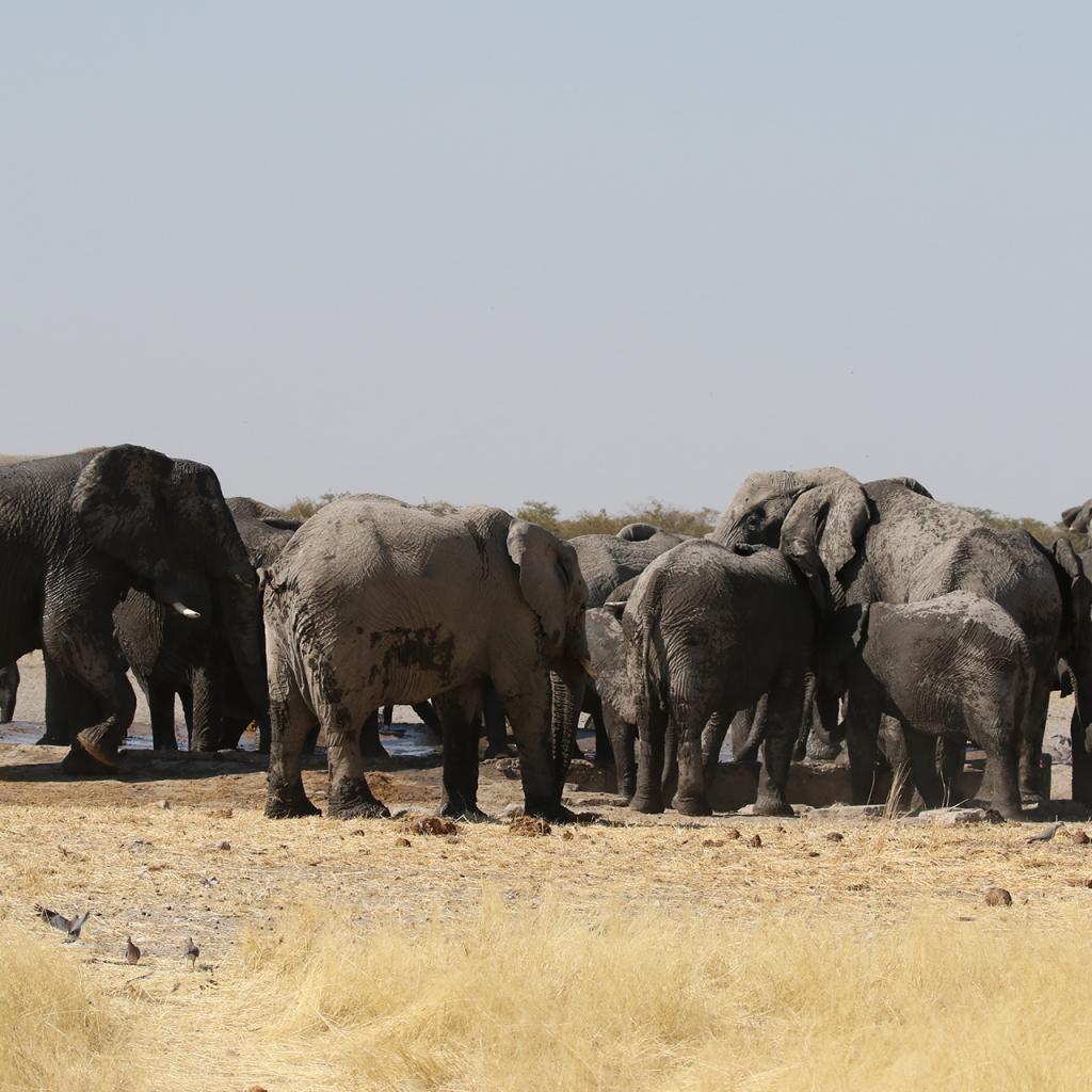 exploringafrica safariadv namibia etosha romina facchi