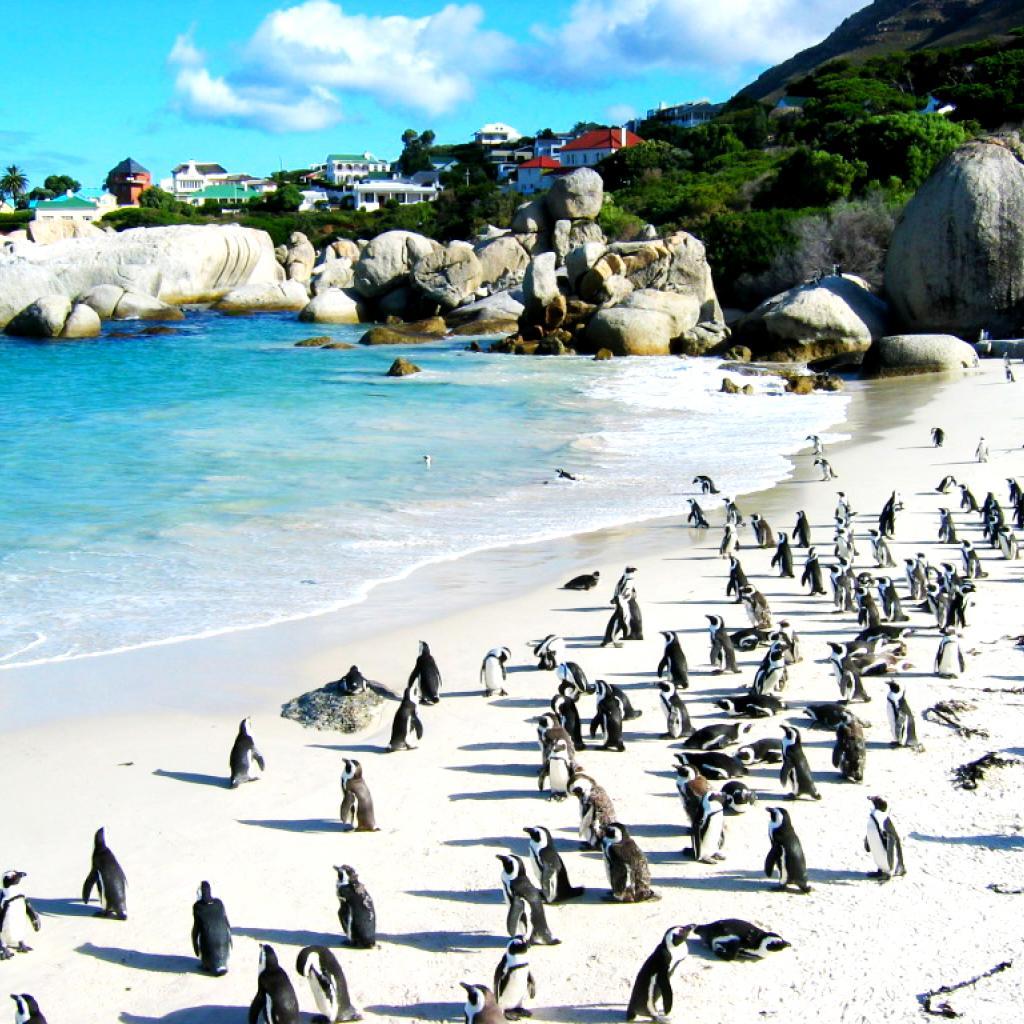 boulders beach south africa exploringafrica safariadv rominafacchi