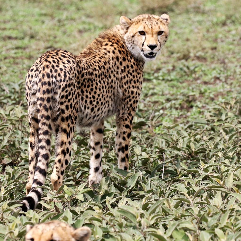 tanzania serengeti exploringafrica safariadv romina facchi travel safari
