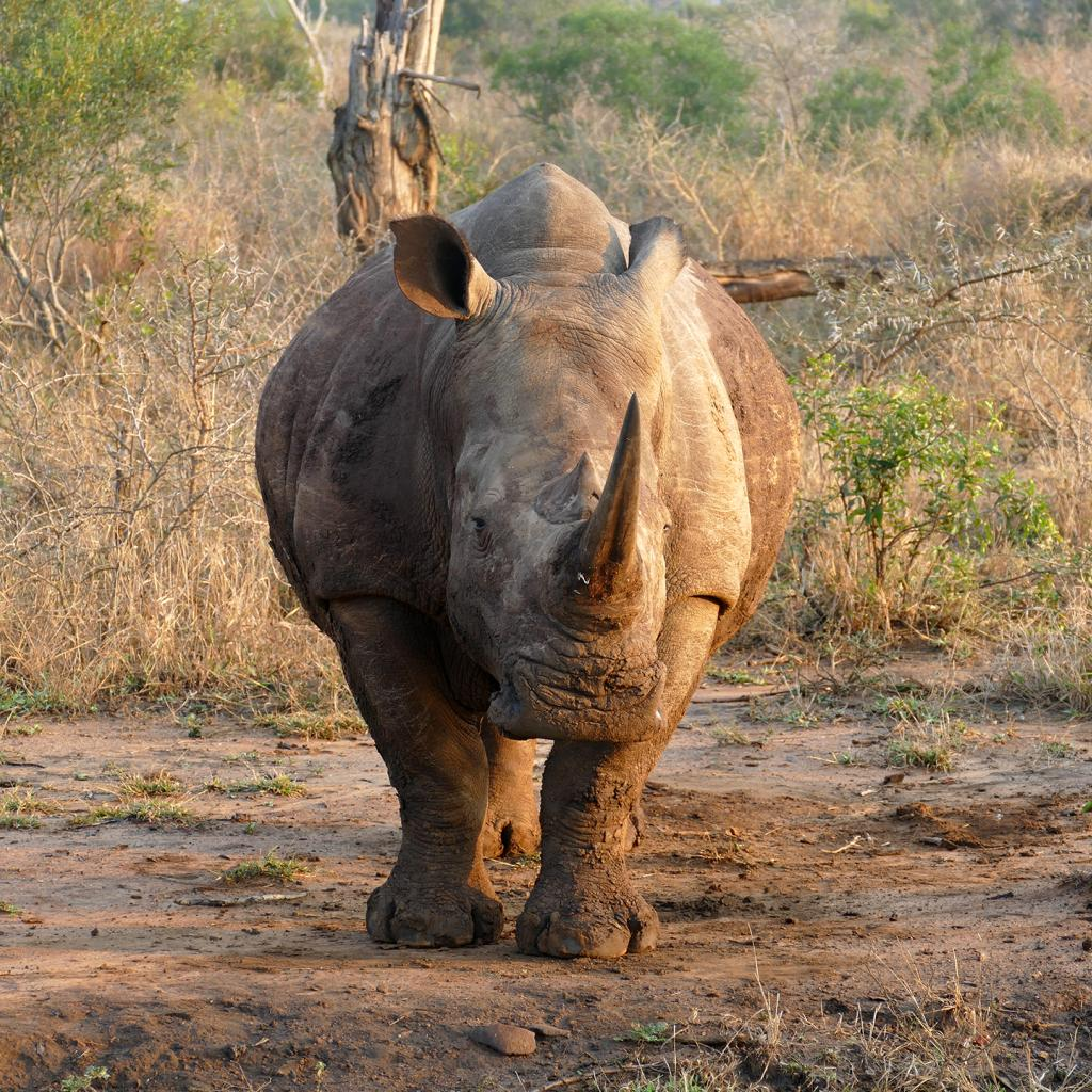 swaziland exploringafrica safariadv romina facchi travel safari africaz