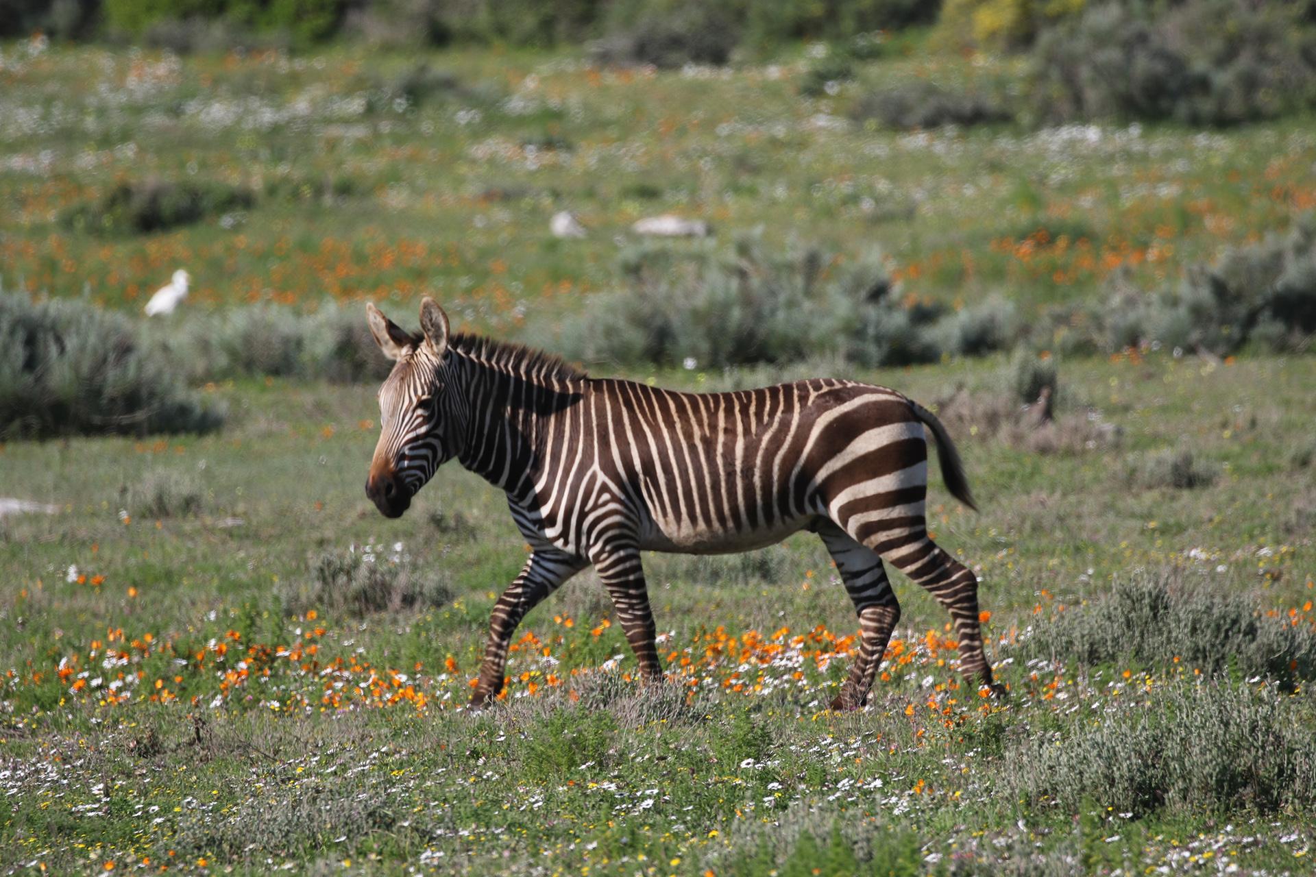 risalente Sud Africa Western Cape